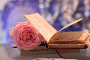 dear_diary_by_silvermoonswan-d5tkyub